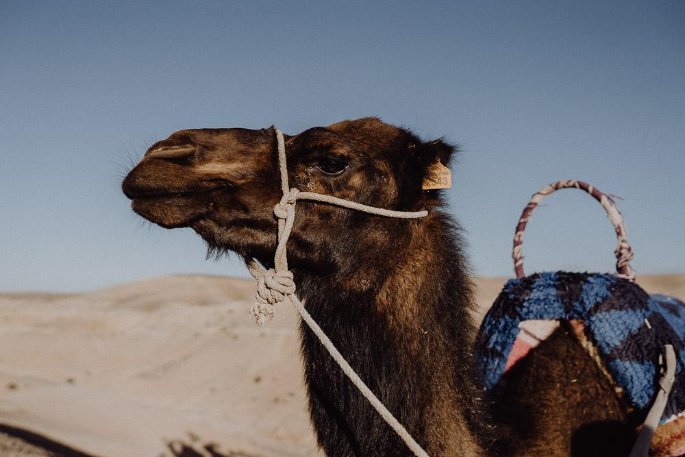 Marrakesh Elopement Hochzeit 194